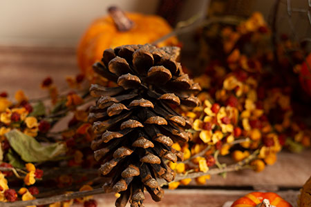 large pine cone with orange gourd and fall decorations in the background